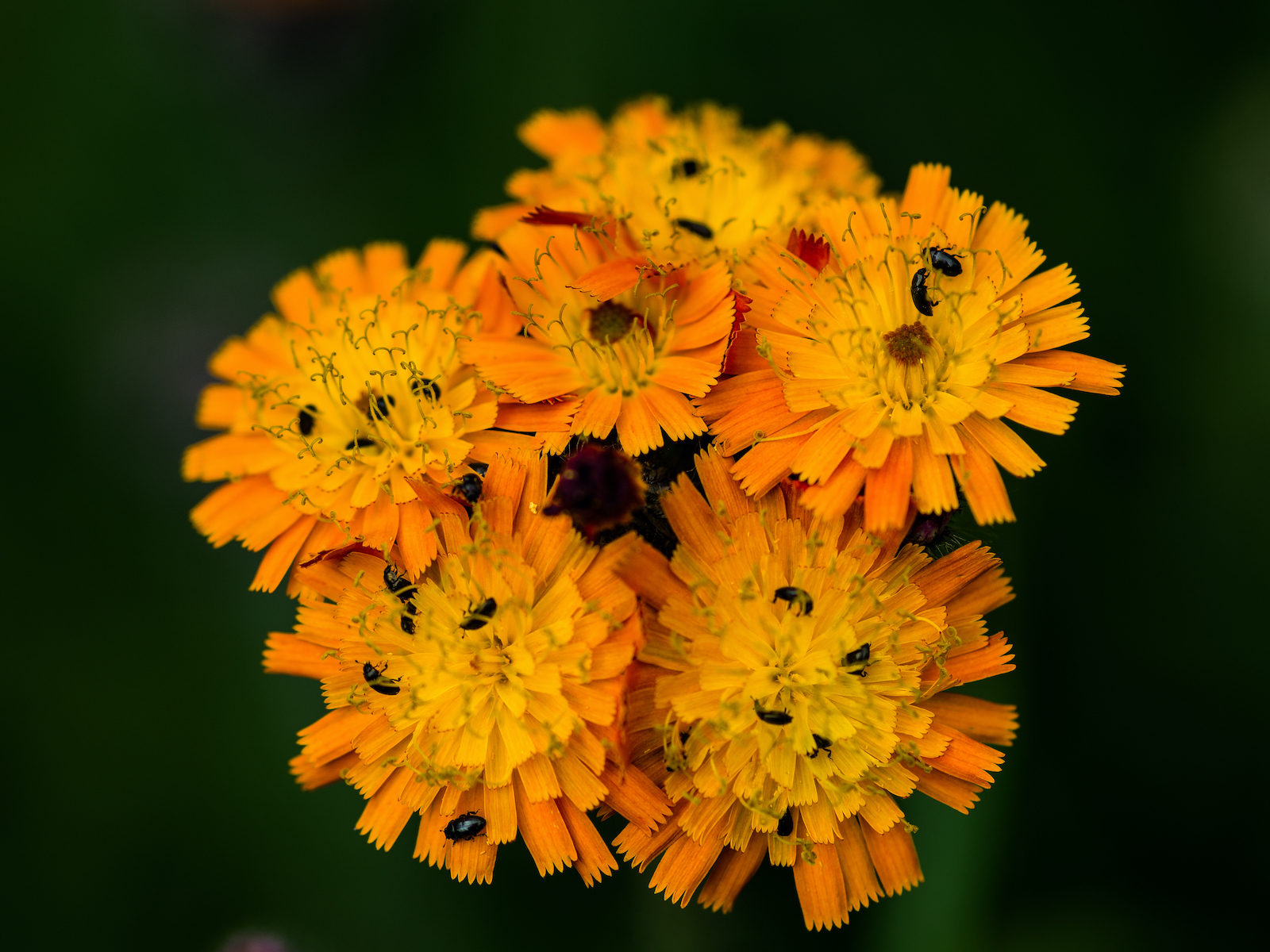 blooming-bugs-by-mark-mingay