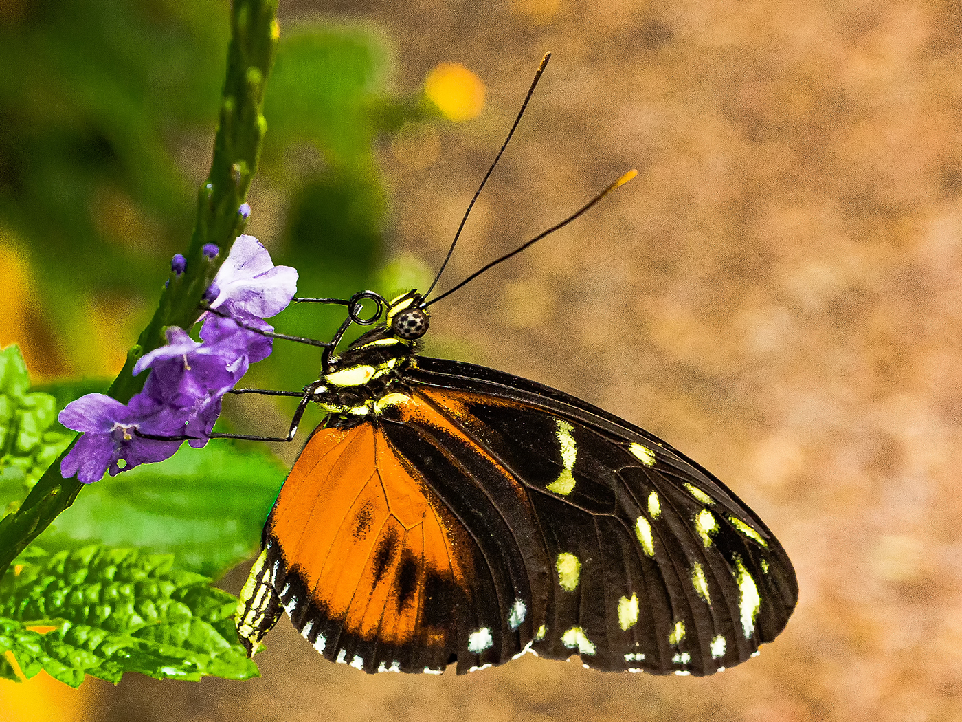 butterfly-by-roy-backhouse