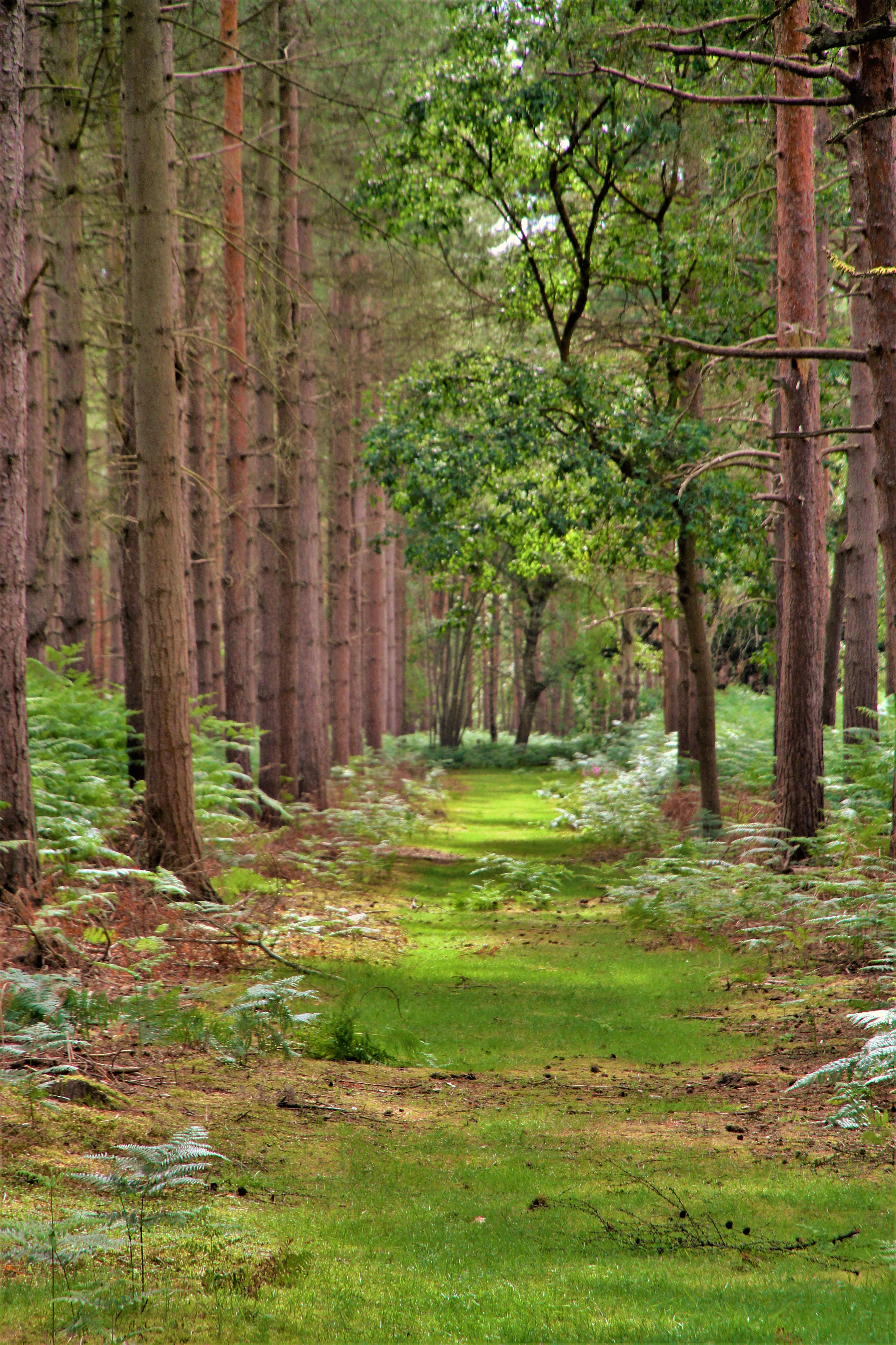 through-the-woods-by-paul-waite