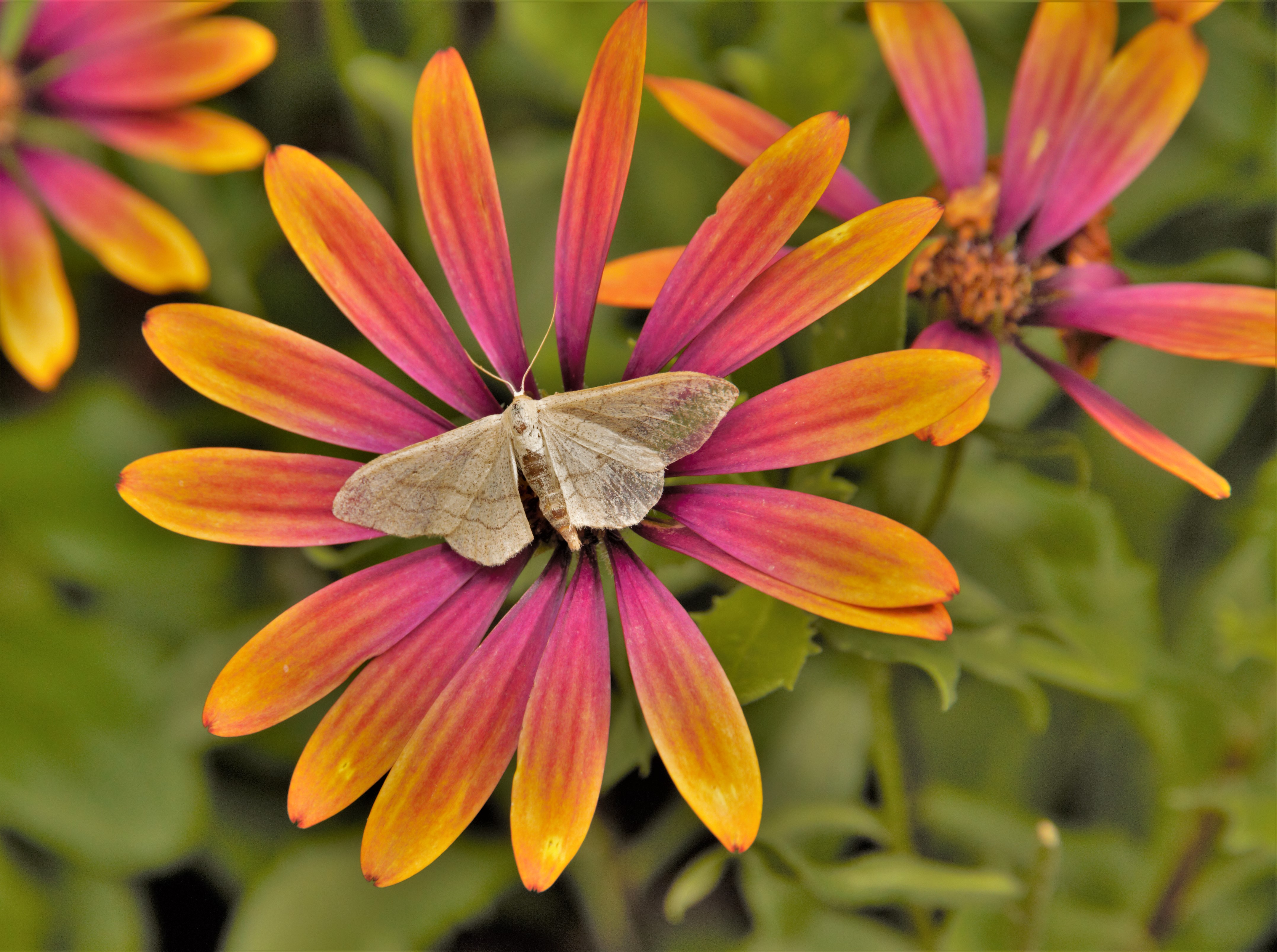 moth-on-flower-by-pal-waite
