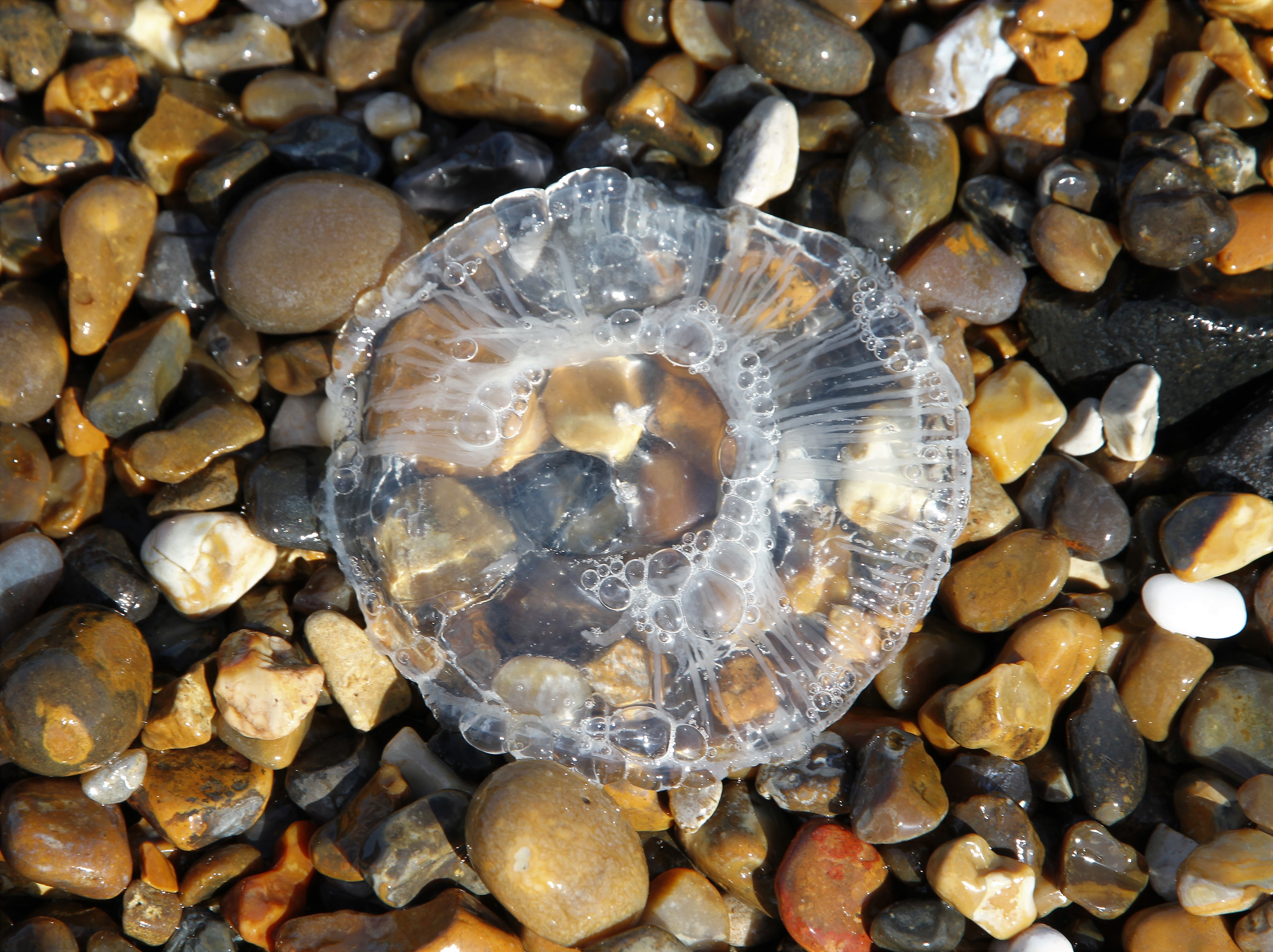 jelly-fish-at-dunwich-by-paul-waite