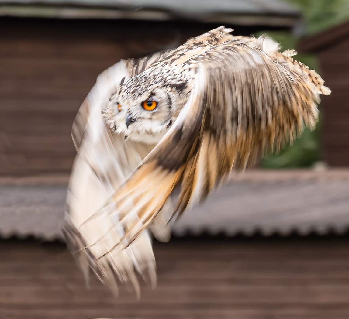owl-at-speed-by-roy-backhouse