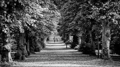 leafy-walk-by-chris-frost