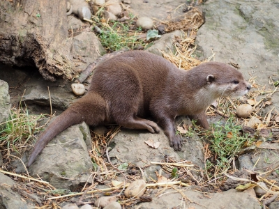 otter-on-alert-by-nick