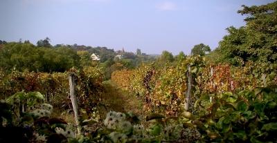 austrian-vineyard-early-autumn-evening-by-richard