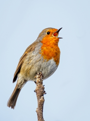 2nd - robin-by-chris-frost.