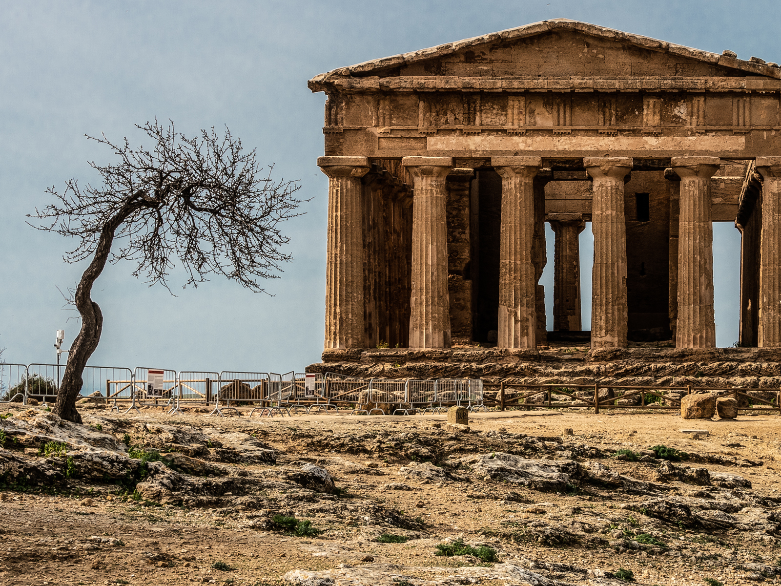 PRINT - fig-tree-and-temple-by-aidan-huxford