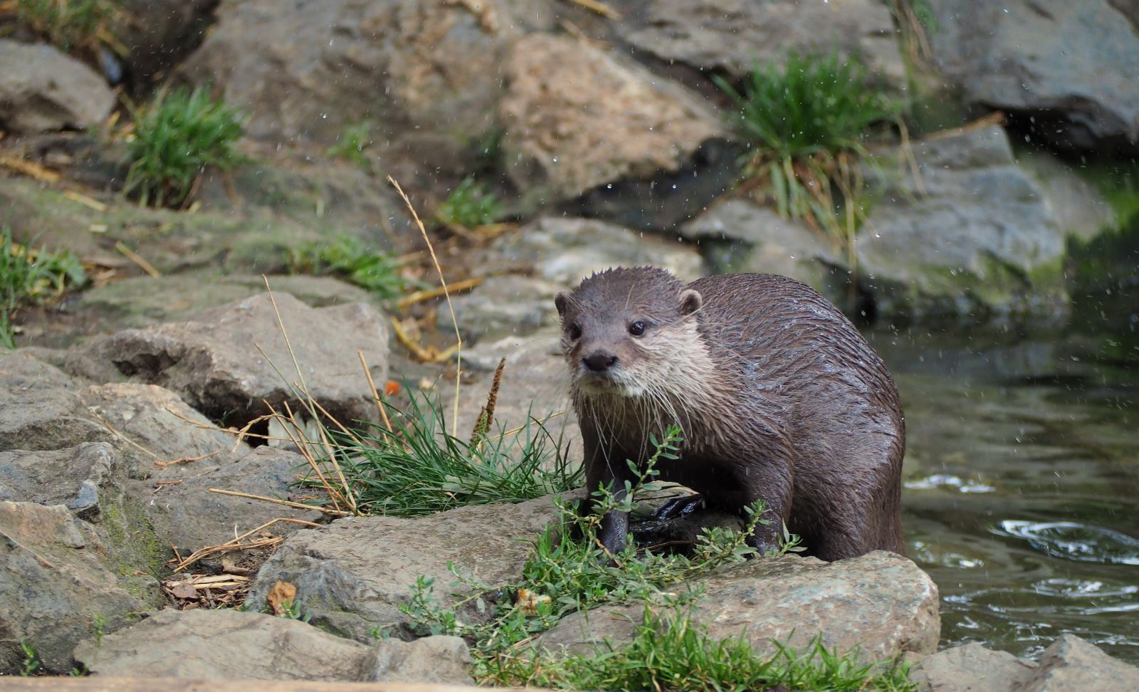 otter-a-touch-damp-by-nick