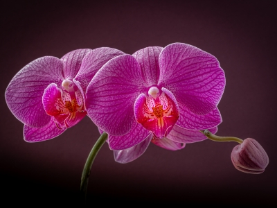 1st - orchid-stem-by-chris-frost