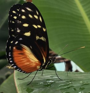 Butterfly by Kelly
