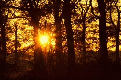 sunburst-by-paul-waite