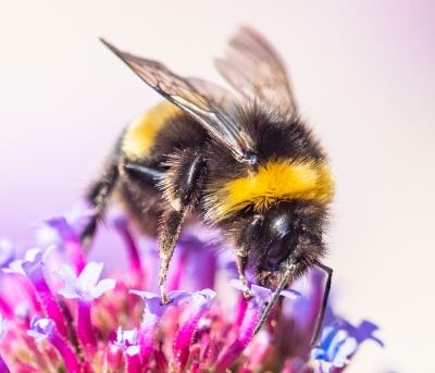 feeding-bee-by-roy-backhouse