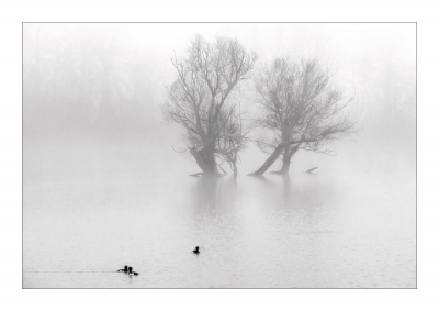 1sr PRINT ducks-in-the-mist-by-peter.
