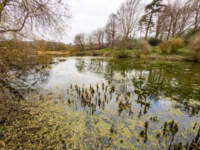 winters-pond-by-roy-backhouse