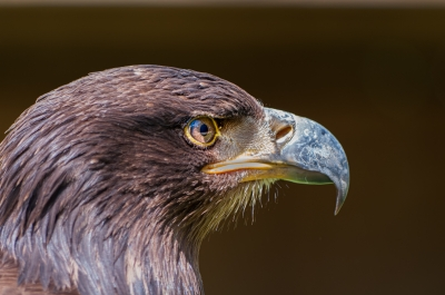 eagle-eyed-by-chris-frost