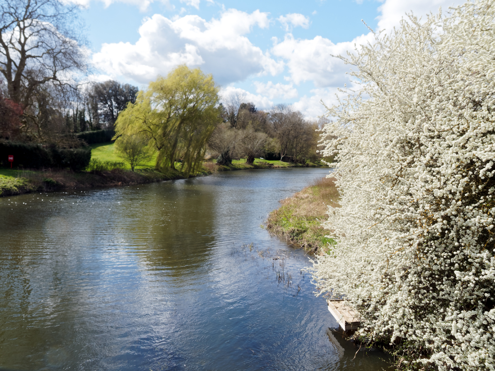blackthorn-and-willow-on-the-ouse-by-laurie