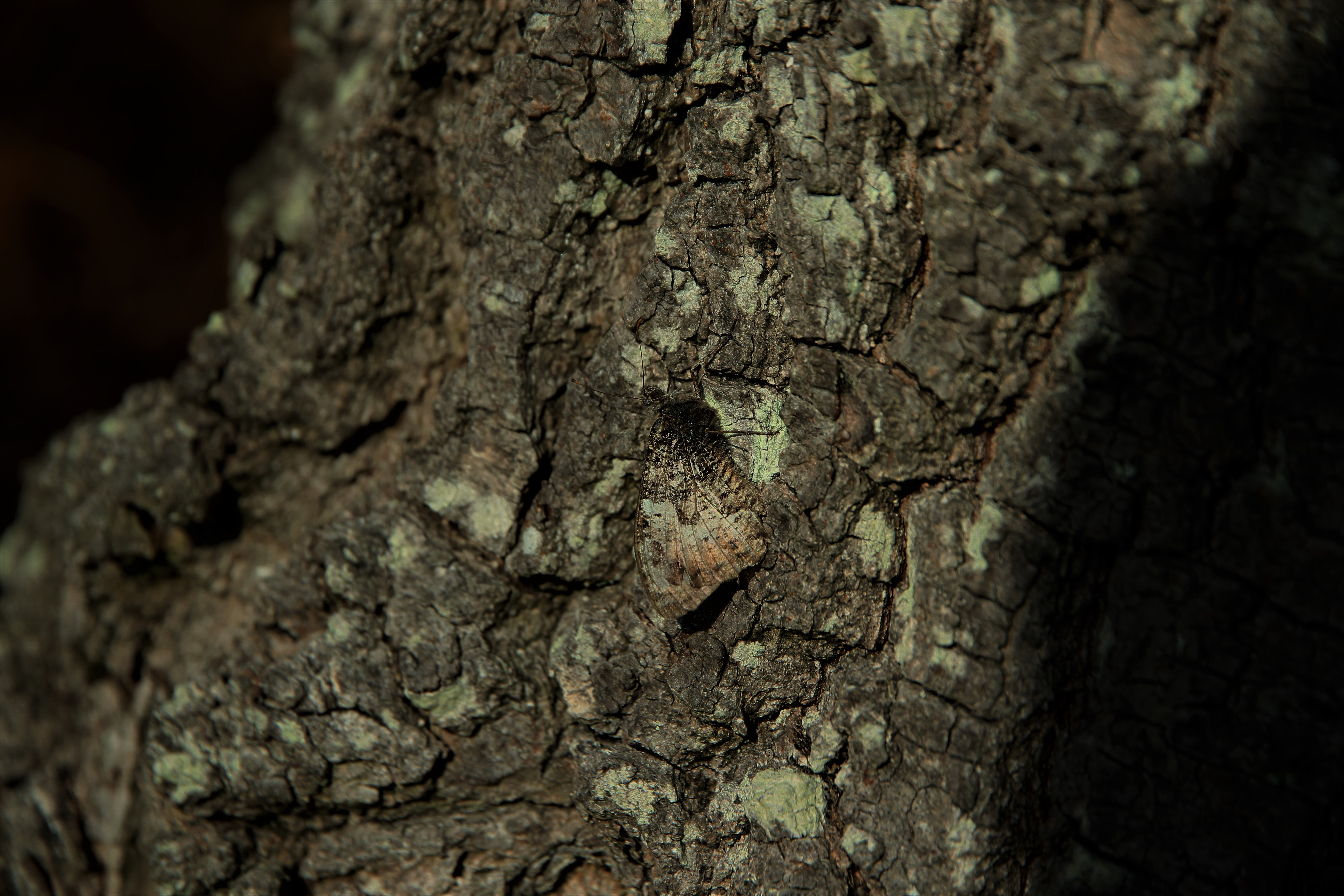 camouflage-by-paul-waite