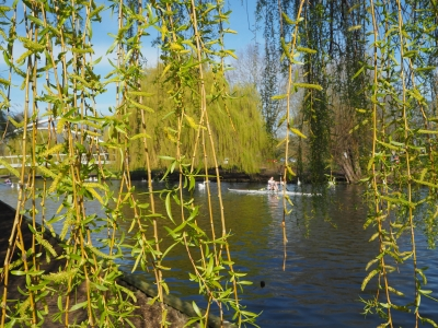 bridge-amongst-the-willows-by-janet