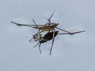 surface-tension-by-chris-frost