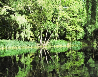trees-on-reflection-by-paul-waite